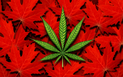The Best Canada Cannabis  is on BC bud Guys?